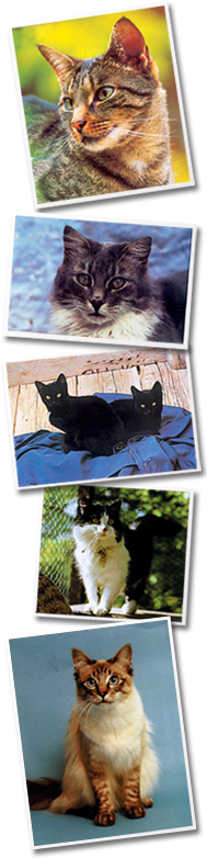 Rowledge Cattery - Our Cats